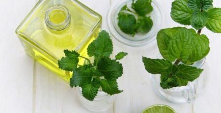 mentol arnika zioła mięta buteleczka